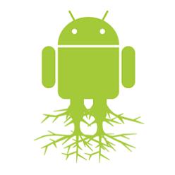 root_darija_web